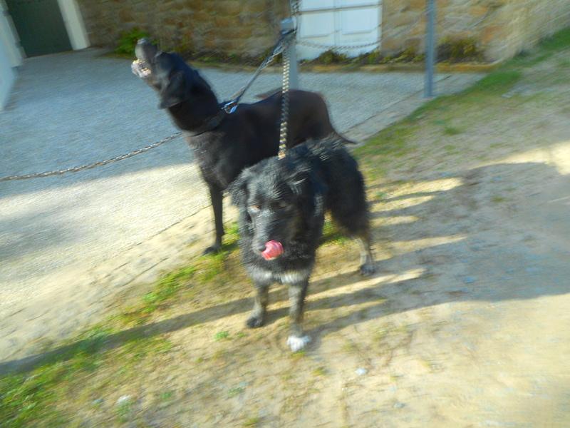 Stella, une amour de chienne très tétue ! - Page 2 Balade63