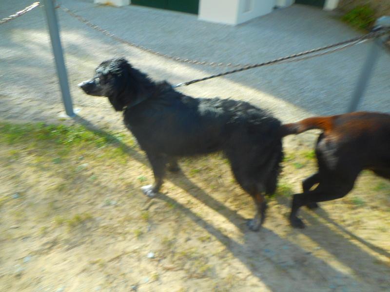 Stella, une amour de chienne très tétue ! - Page 2 Balade64