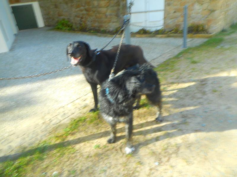 Stella, une amour de chienne très tétue ! - Page 2 Balade67