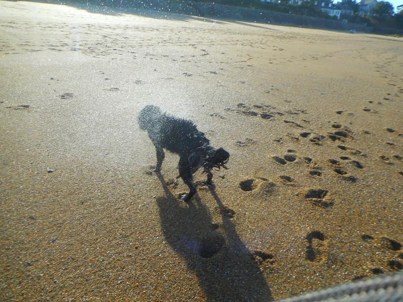 Stella, une amour de chienne très tétue ! - Page 2 Balade69
