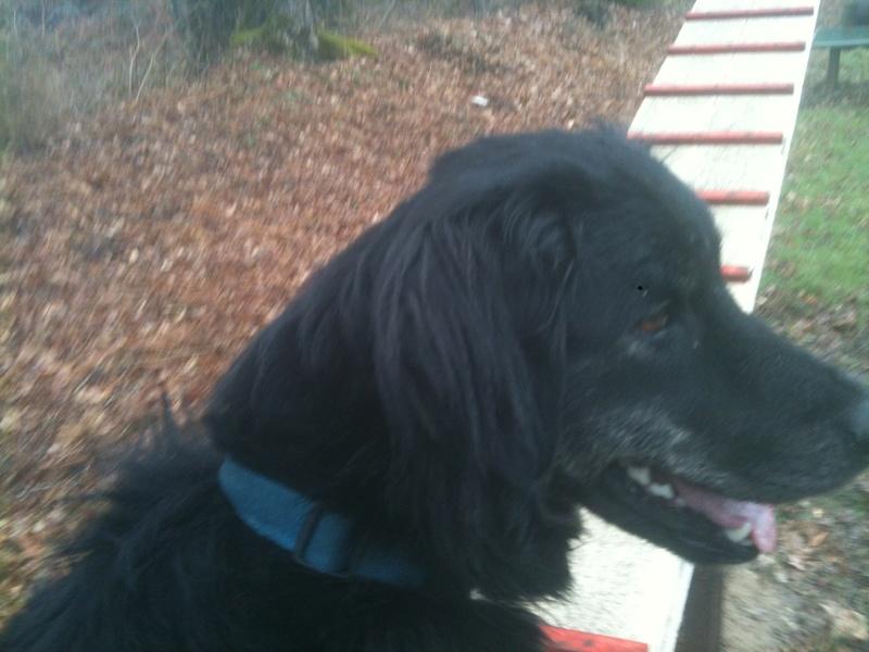 Stella, une amour de chienne très tétue ! - Page 3 Dsc_le16