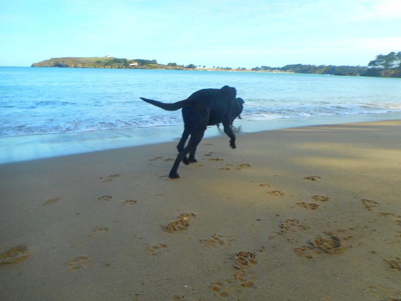 Stella, une amour de chienne très tétue ! - Page 2 Ed_00510