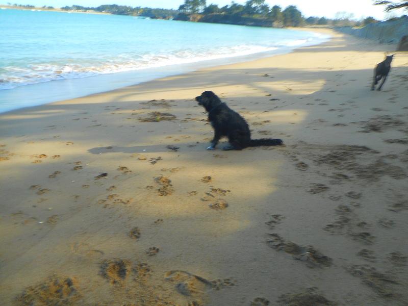 Stella, une amour de chienne très tétue ! - Page 2 Ed_01010