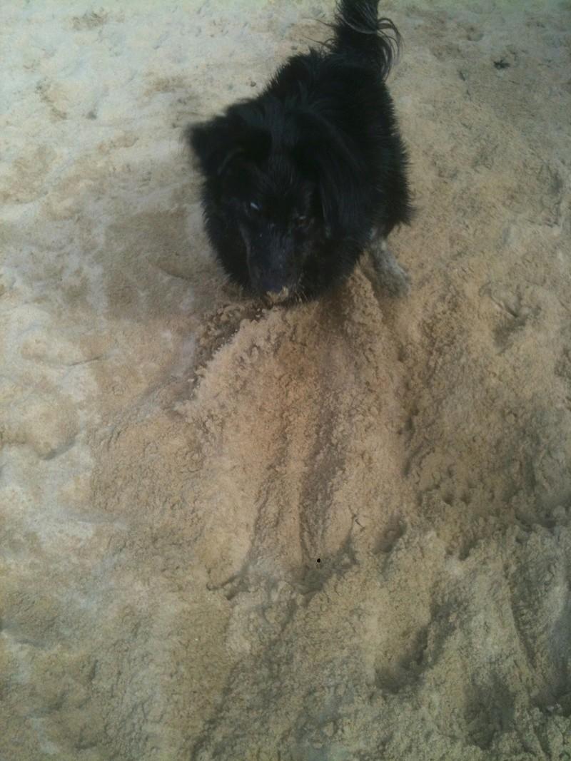 Stella, une amour de chienne très tétue ! - Page 4 En_nor12