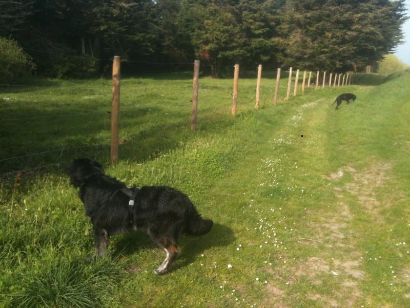 Stella, une amour de chienne très tétue ! - Page 4 En_nor18