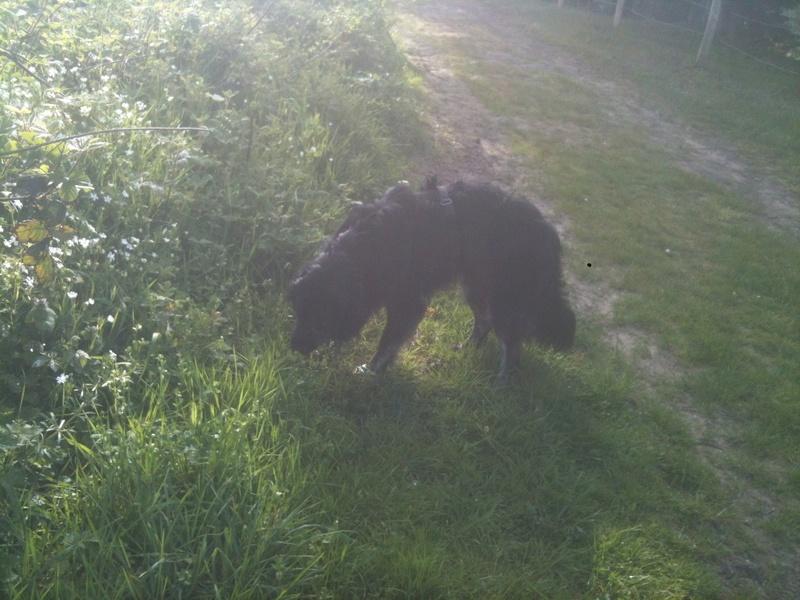 Stella, une amour de chienne très tétue ! - Page 4 En_nor19