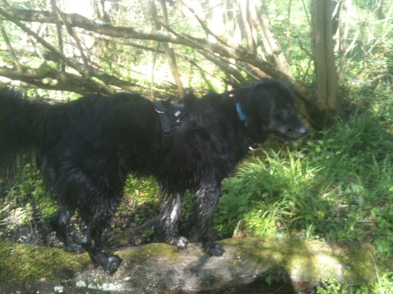 Stella, une amour de chienne très tétue ! - Page 4 En_nor27