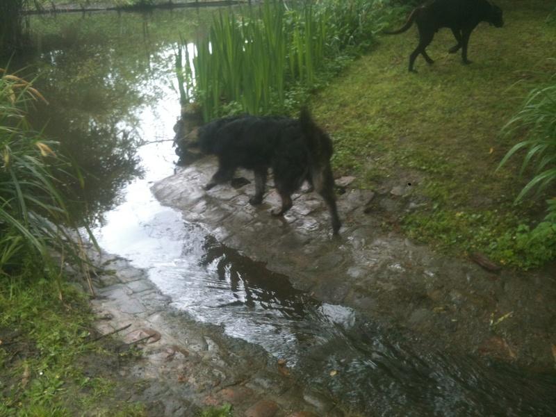 Stella, une amour de chienne très tétue ! - Page 4 En_nor32