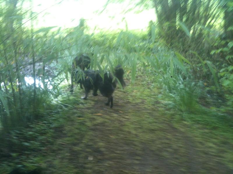 Stella, une amour de chienne très tétue ! - Page 4 En_nor33