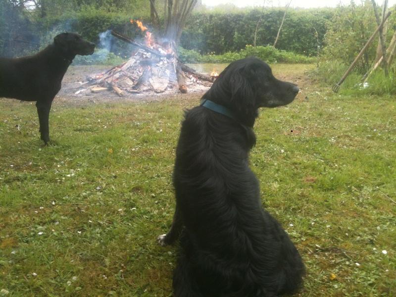 Stella, une amour de chienne très tétue ! - Page 4 En_nor40