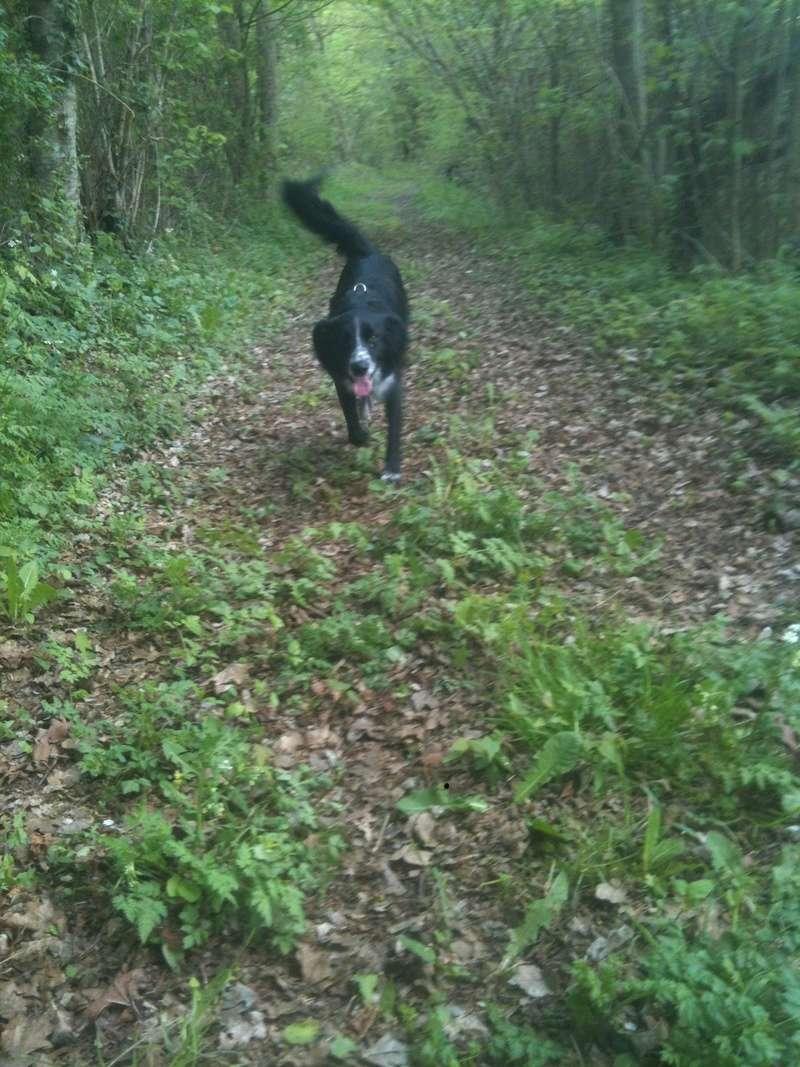 Stella, une amour de chienne très tétue ! - Page 4 En_nor43