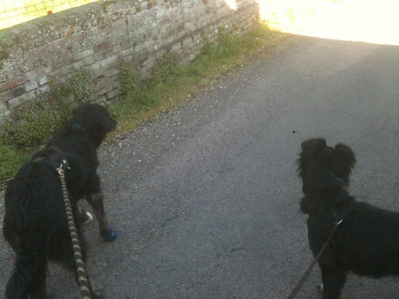 Stella, une amour de chienne très tétue ! - Page 4 En_nor50