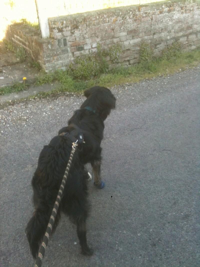 Stella, une amour de chienne très tétue ! - Page 4 En_nor51