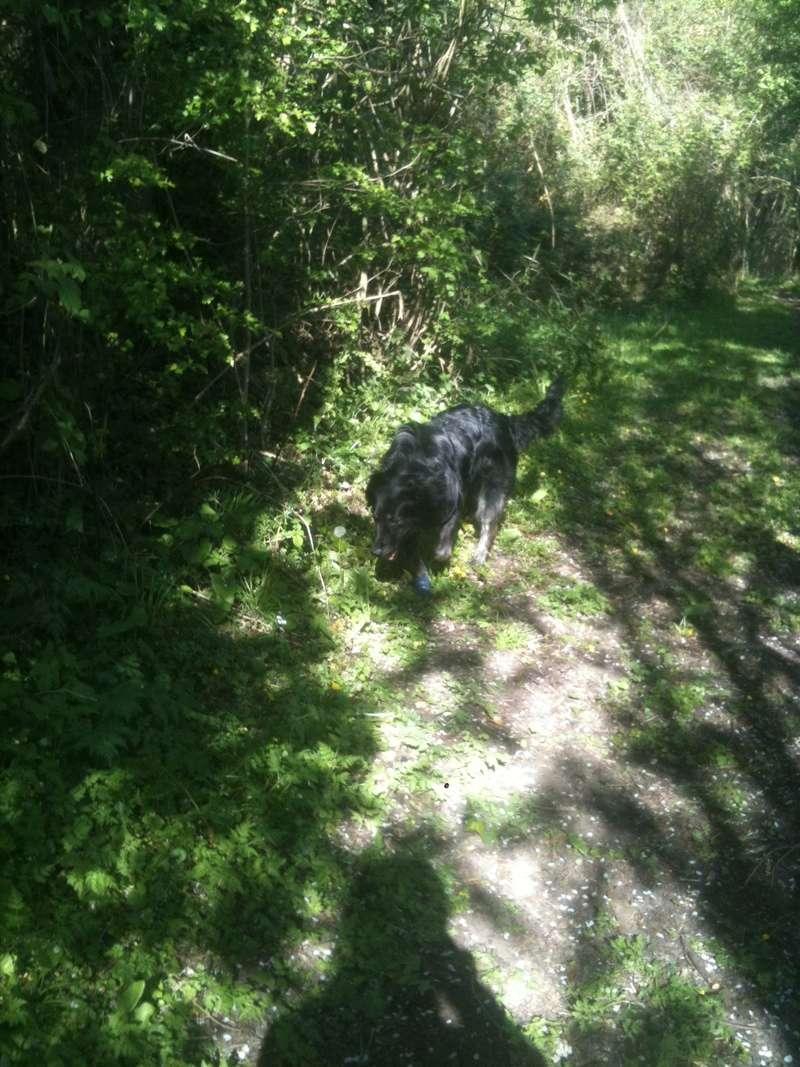 Stella, une amour de chienne très tétue ! - Page 4 En_nor52