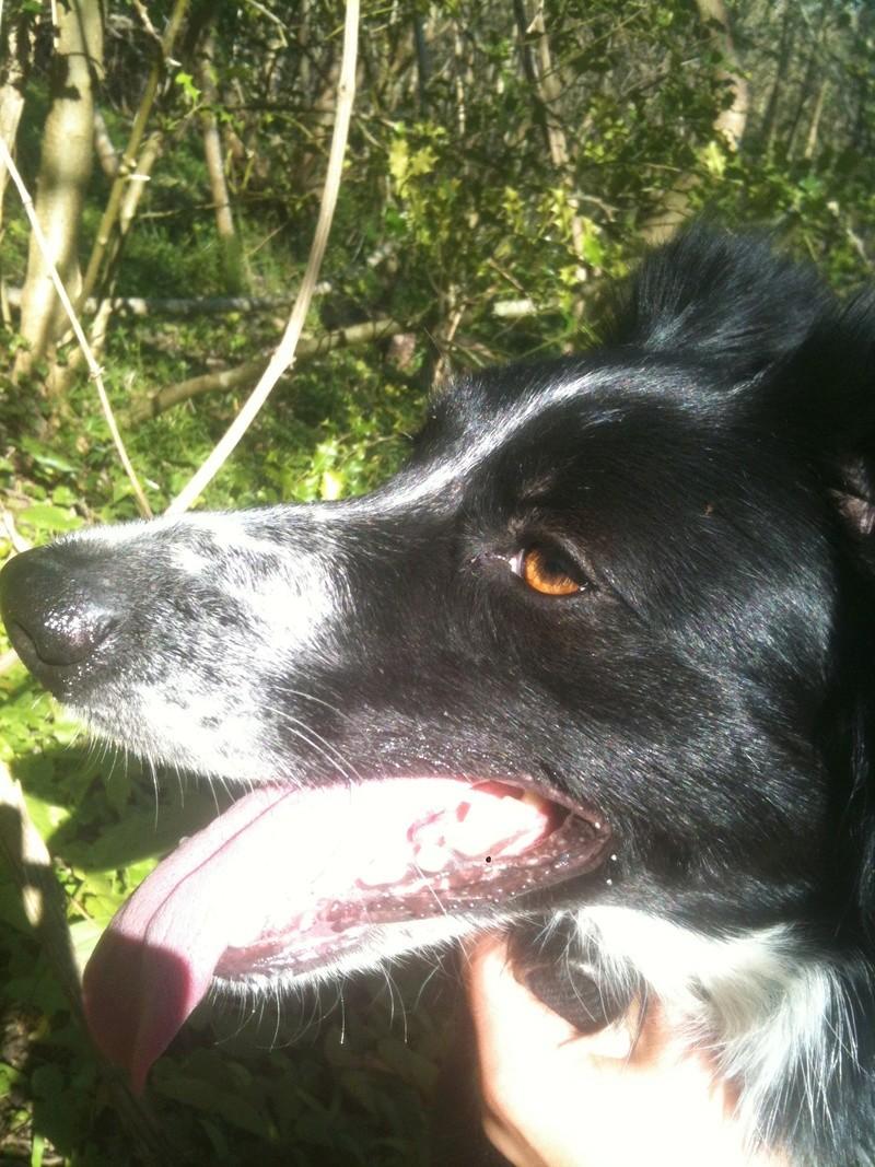 Stella, une amour de chienne très tétue ! - Page 4 En_nor54