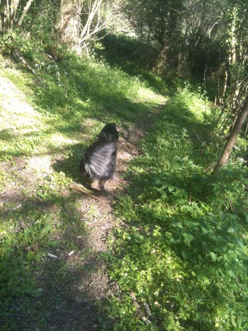 Stella, une amour de chienne très tétue ! - Page 4 En_nor58