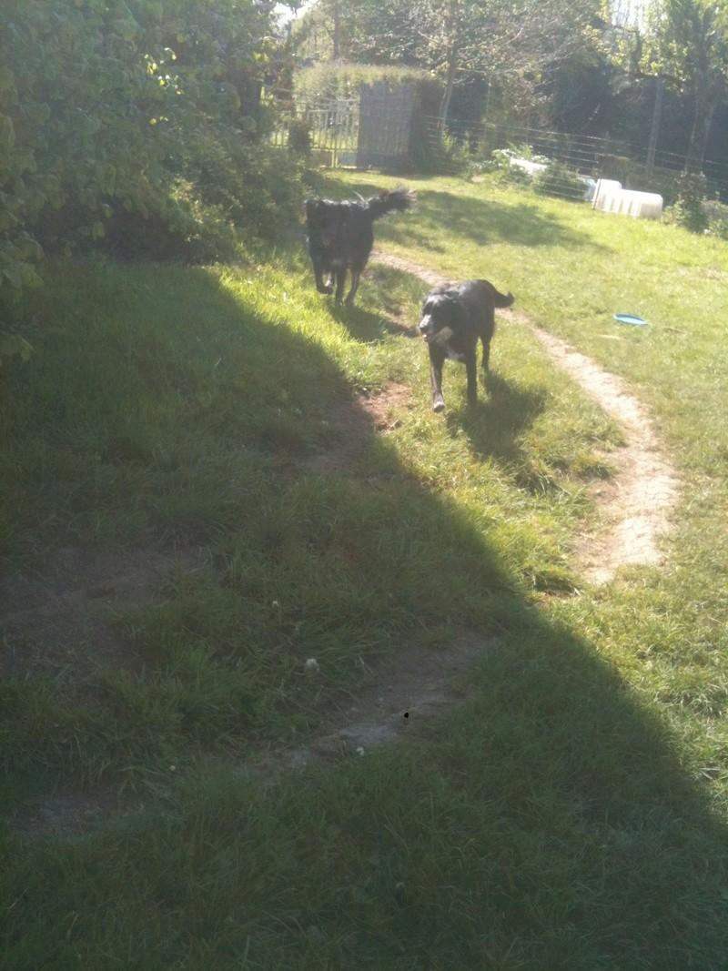 Stella, une amour de chienne très tétue ! - Page 4 En_nor65