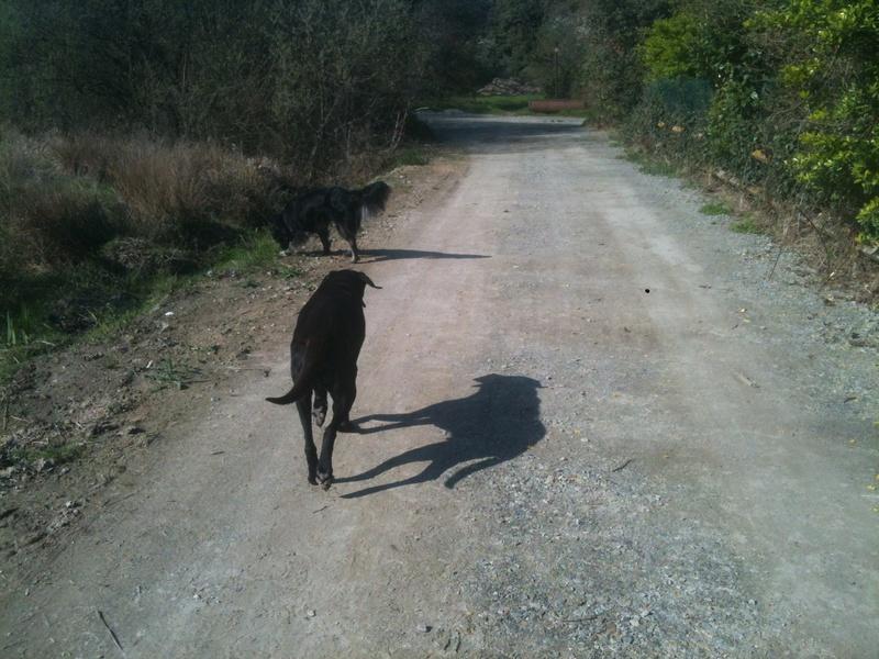 Stella, une amour de chienne très tétue ! - Page 3 Les_po15
