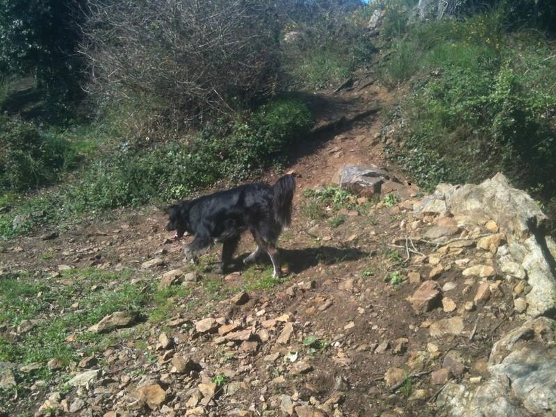 Stella, une amour de chienne très tétue ! - Page 3 Les_po18