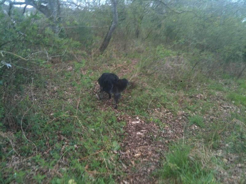 Stella, une amour de chienne très tétue ! - Page 3 Les_po38