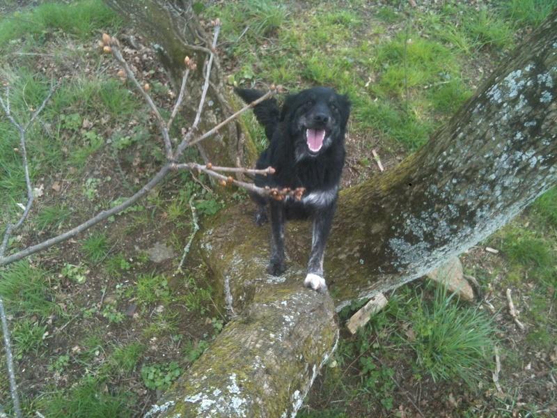 Stella, une amour de chienne très tétue ! - Page 3 Les_po42