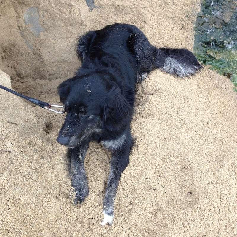 Stella, une amour de chienne très tétue ! - Page 3 Photos13