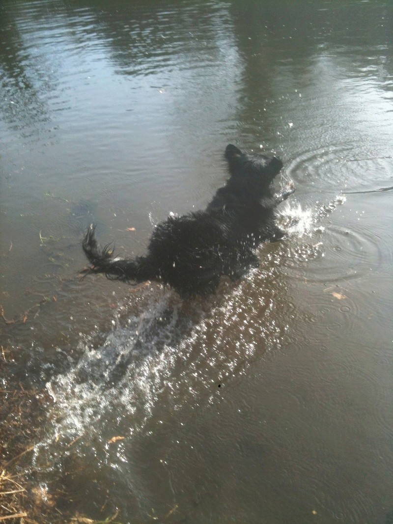 Dogs in the water T_01811