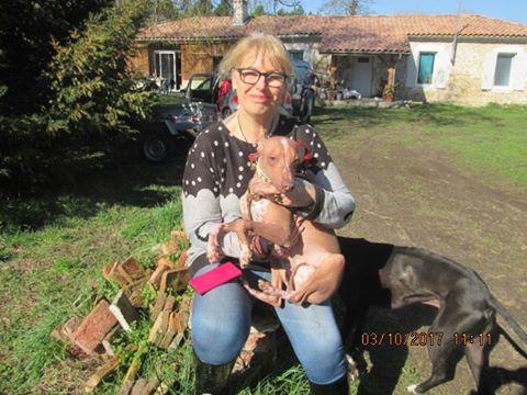 Mingus bébé nu Péruvien , 7 mois  Adopté  17200910