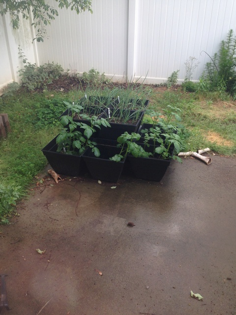 Update on Garden in Acworth GA Img_0312