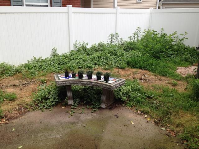 Update on Garden in Acworth GA Img_0316