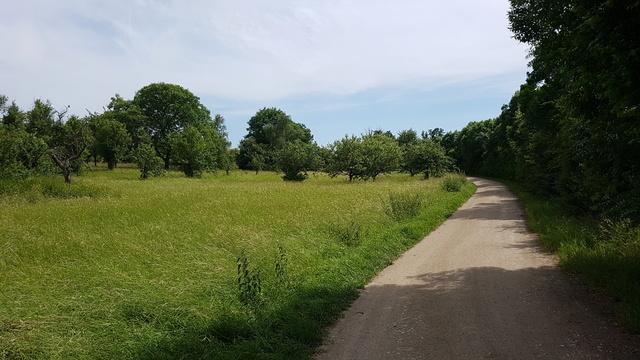 65239 Hochheim-Massenheim Rundweg Friedhof-Wicker-Hochheim Version 6,8 km.  20170638