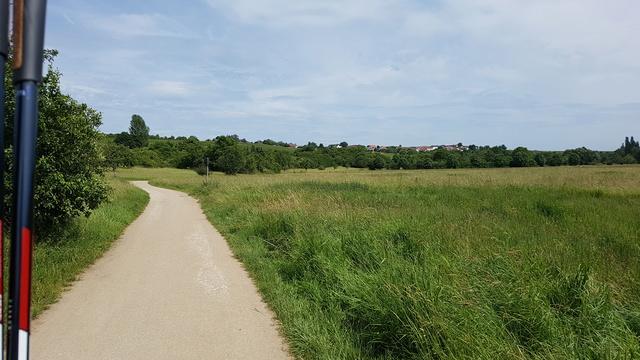 65239 Hochheim-Massenheim Rundweg Friedhof-Wicker-Hochheim Version 6,8 km.  20170639