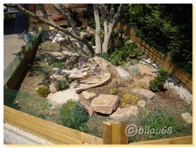 Habitat tortue des steppes Bilouu10