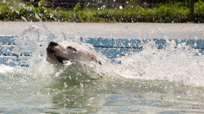 So staffies don't like water, eh? Boss10