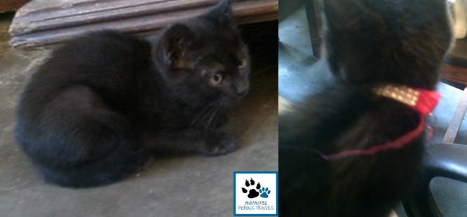 Nina, Petite chatonne trouvée avec collier  Chaton11