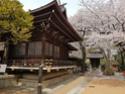 La Floraison des cerisiers au Japon - Sakura Zensen 20170414