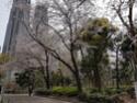 La Floraison des cerisiers au Japon - Sakura Zensen 20170421