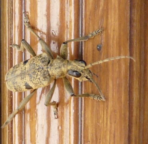 Qu'est-ce ? Insect11