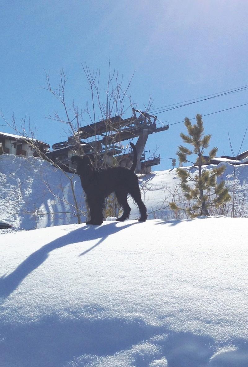 Nouveau CONCOURS PHOTOS: Un Schnauzer en hiver - Page 2 Img_2211