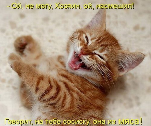 О КОТАХ!!!(доза позитива!!!) 12587910