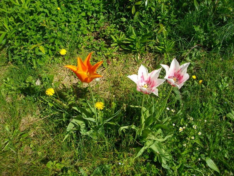 Fleurs de saison Imgp7911