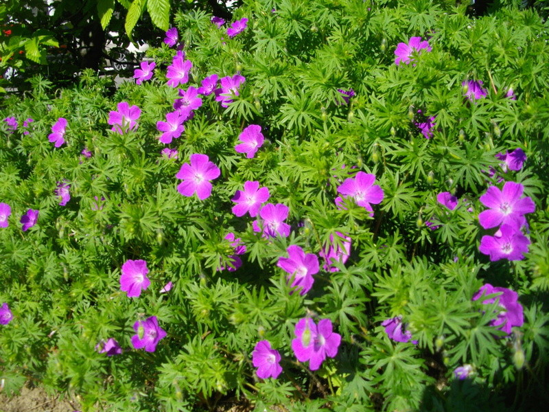 Fleurs de saison Imgp7912