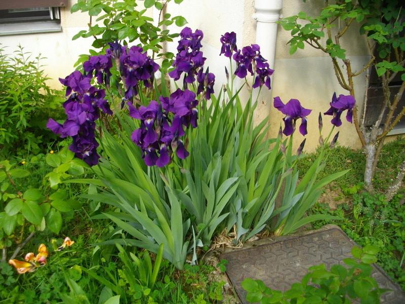 Fleurs de saison Imgp8010