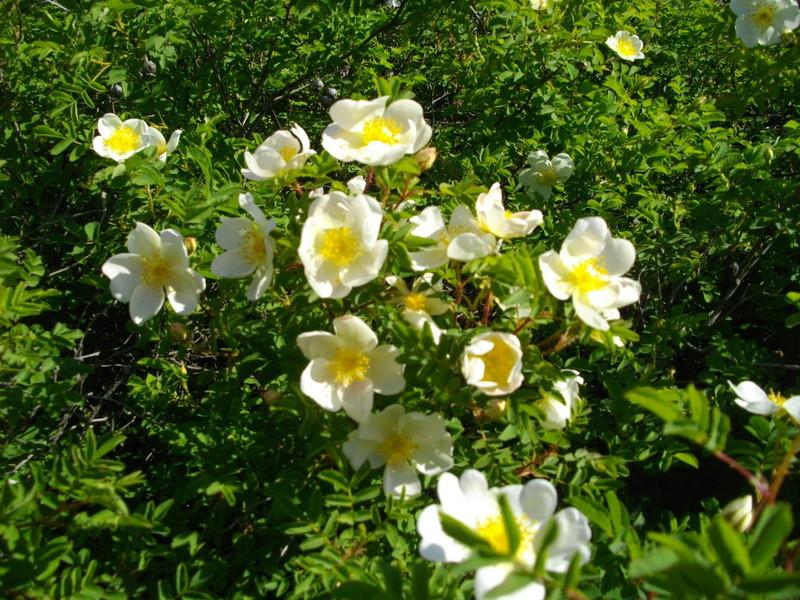 Fleurs de saison Imgp8011
