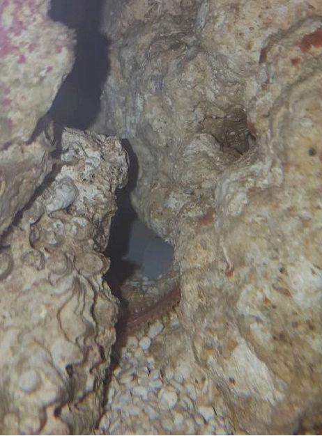 Crabe nuisible ou pas ? Versde10