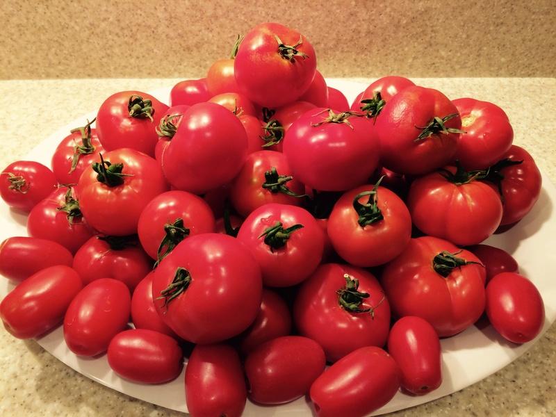2017 SFG in Brooks, Ga - Page 5 Tomato24