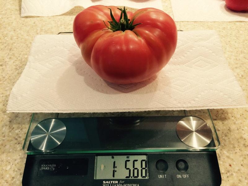 2017 SFG in Brooks, Ga - Page 5 Tomato28