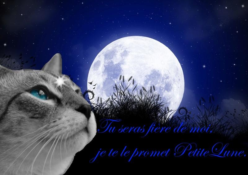 Présentation : qui est Phenix de la lune ? Lune_n11