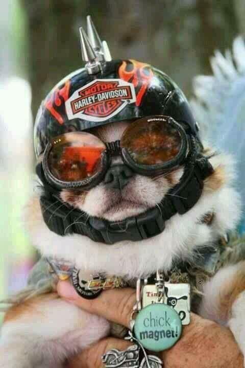 Humour en image du Forum Passion-Harley  ... - Page 5 16806710