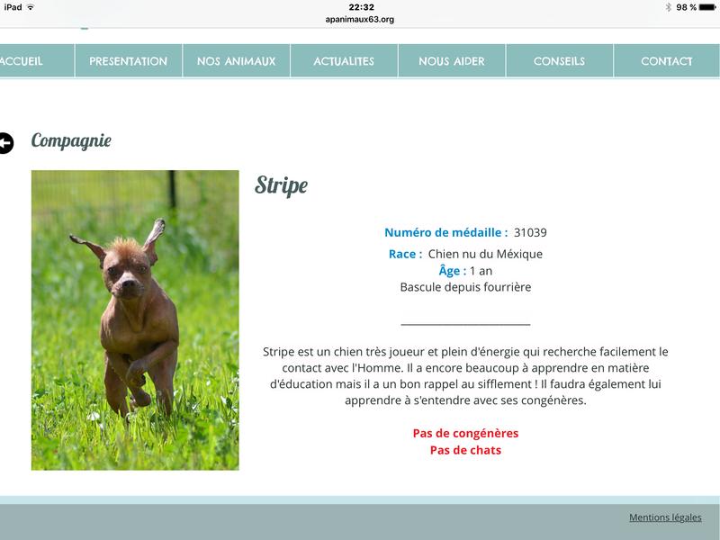 Stripe chien nu du mexique 1 an (Gerzat, 63) Img_0710